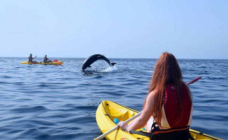 קייאקים עם דולפינים בטנריף