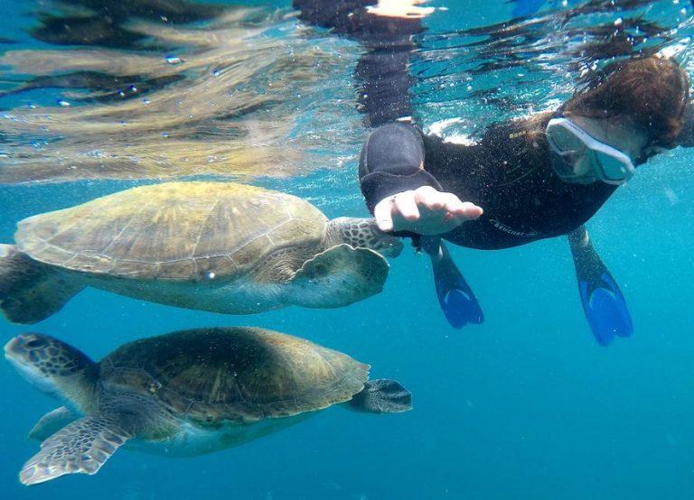 טנריף שנורקלינג עם צבי ים