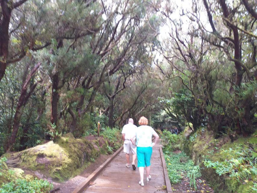 סיור יער אנגה טנריף