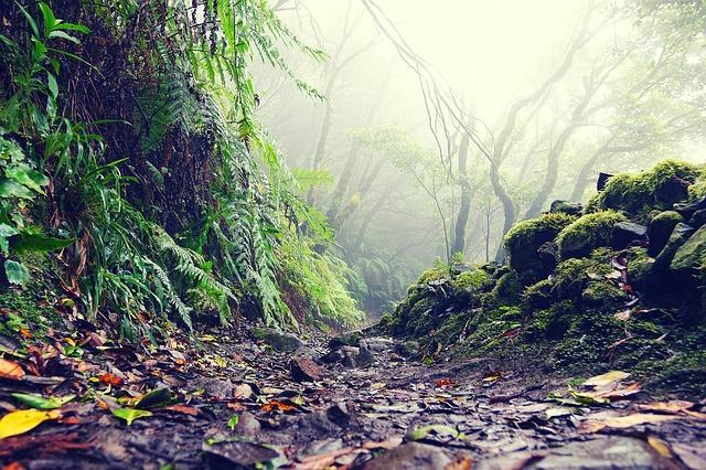 יערות הגשם טיול מודרך
